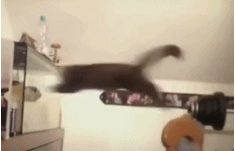 猫咪的迷惑行为