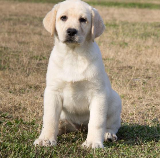 什麼狗好養活,一般需要多少錢,養狗的好處有哪些