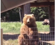原来熊也可以这么可爱!