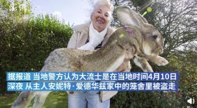 世界最大兔子被盗