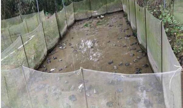 泥鳅养殖业成本和收益如何?投资泥鳅养殖业未来还有利可图么?
