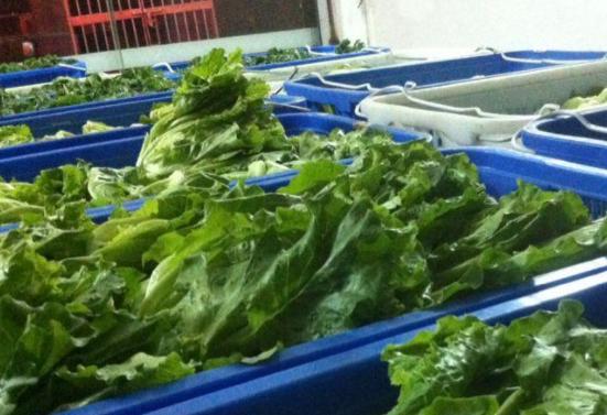 蔬菜的配送平台有哪些,蔬菜配送生意如何起步