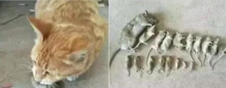 """男子收养了一只小猫,一个不注意,就让它酿成了""""惨剧"""""""
