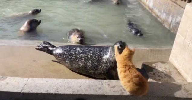 海豹:我说啥了 上来就一耳光 猫:滚回水里去
