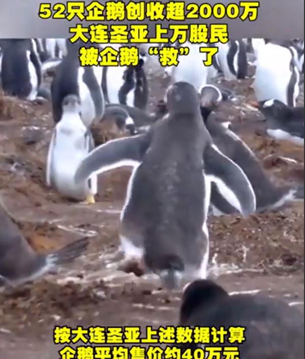 52只企鹅创收超2000万成功扭亏为盈,租卖企鹅成了新业务
