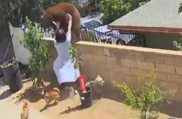 家中黑狗战败 美国17岁女孩徒手把棕熊推下围墙