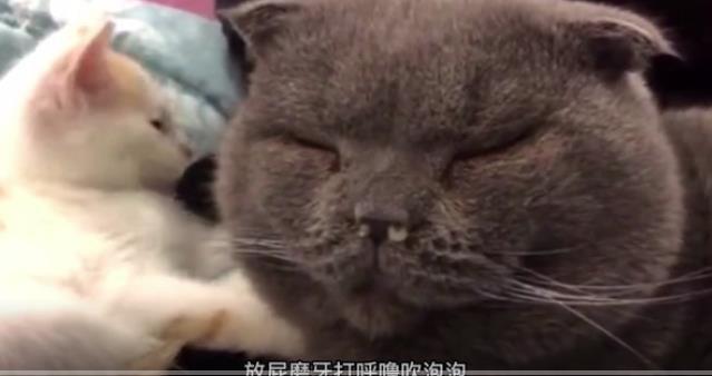 猫:就怪我以前眼神不好 看上这么个玩意