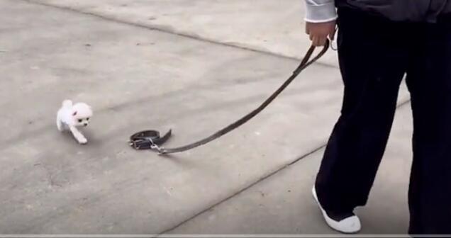 狗:你是遛狗呢 还是遛绳呢 快把我套上