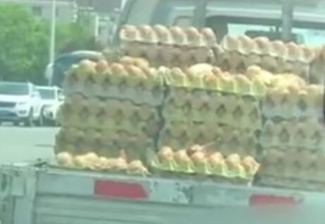 高温与烈日下 运鸡蛋的货车上出现小鸡