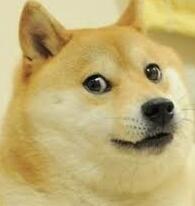 这个一直给Doge当配角的狗子 正在成为下一代Doge