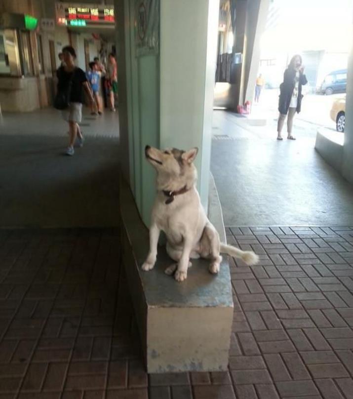 二哈真精!把路人逼进便利店给它买热狗