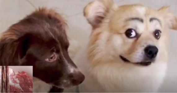 狗:穷成这样 以后别学人家养宠物了