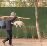 狗狗第一次尝试飞行