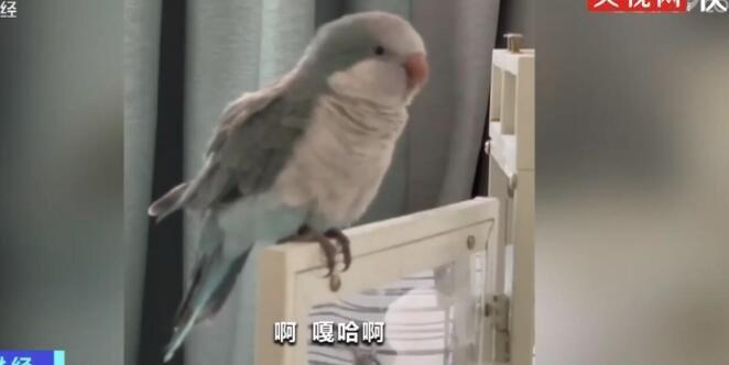 """""""东北话十级"""" 一只鹦鹉跟饲养员学了一口东北话"""