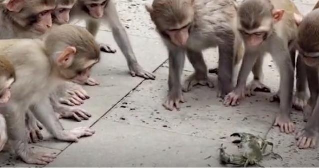 猴子:这是什么玩意儿 怎么这么多腿?