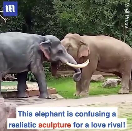 """愤怒的雄象误把巨大的大象雕塑当成""""情敌"""" 而将其撞倒在地"""