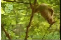 这猴子也有够大胆的