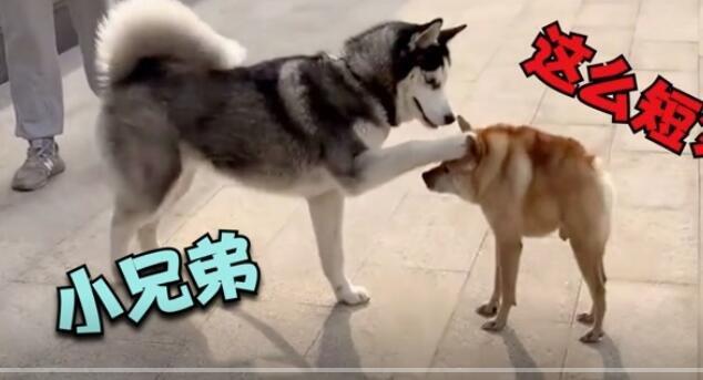 二哈:这狗很贵吗?怎么就买半只啊?