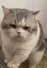 """一只""""肥美""""的猫猫"""