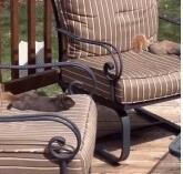 晒日光浴的小松鼠
