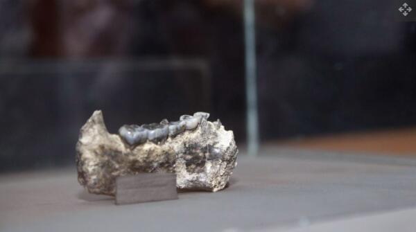 已知最早的人属化石,这块颚骨,是在埃塞俄比亚阿法尔州的一个名为 Ledi-Geraru 的地点发现的.jpg