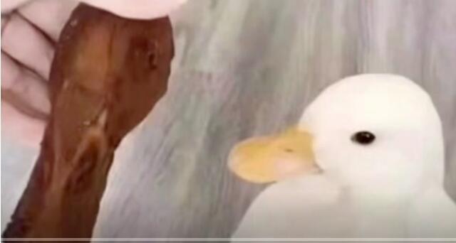 鸭子:有点眼熟 好像二舅