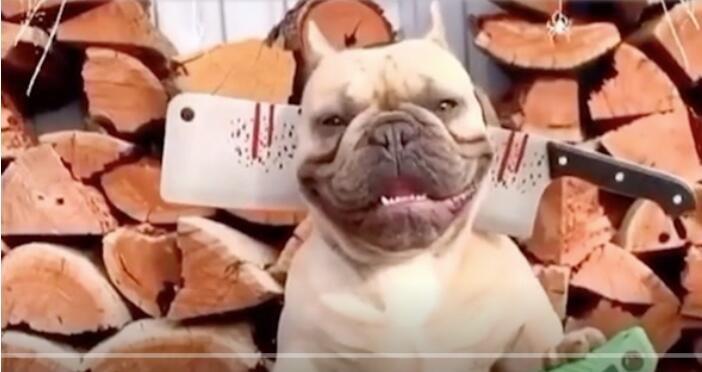 狗:看见我头上的刀了吗 以后叫我大哥