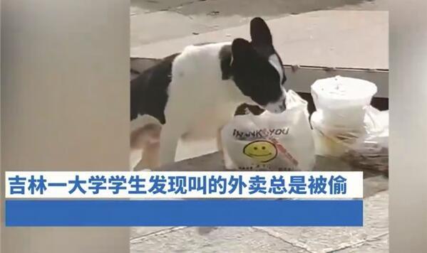 高校流浪狗常偷学生外卖藏着吃 网友:画面既生气又好笑