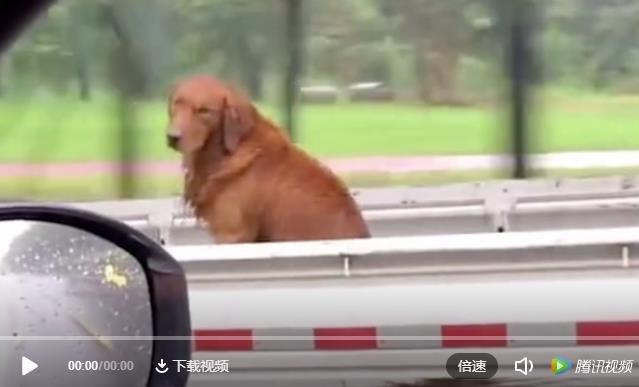 狗:都是狗 凭什么他能坐副驾驶?我就得淋雨