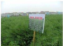 600316農發展種業中油589