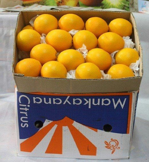 000061农 产 品南非橙