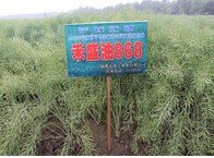 600316農發種業禾盛油868