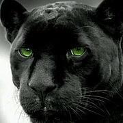 绿色的眼睛
